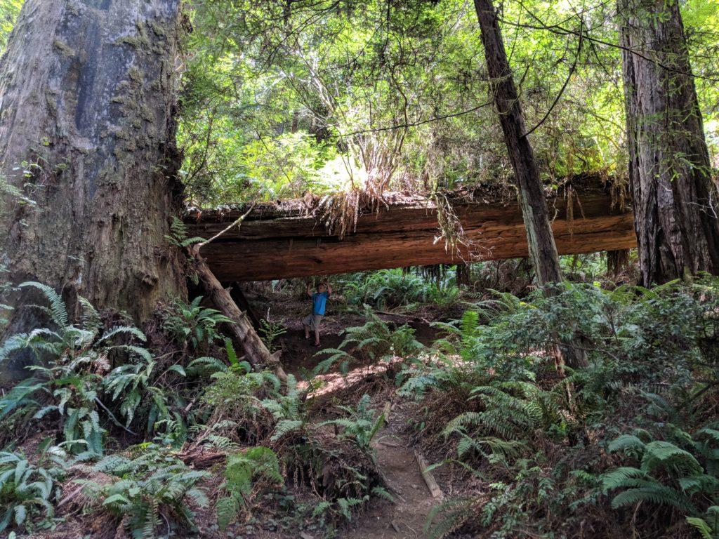 Trillium Falls Trails